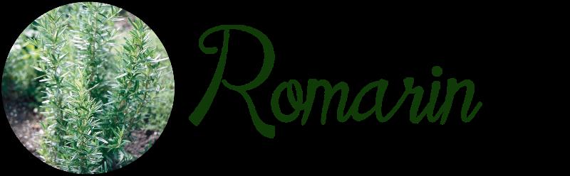 Cette image a un attribut alt vide;  son nom de fichier est romarinT.png